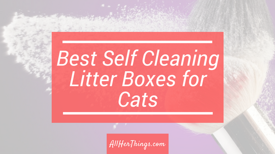 Best Self Cleaning Litter Boxes for Cats